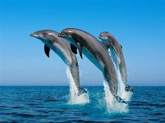 Passeio de Barco em Sesimbra, Tróia e Cabo Espichel com Observação de Golfinhos para 2 Pessoas desde 70€.