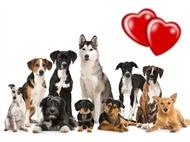 Curso de Cuidados e Procedimentos com Cães. Cuide do Seu Amigo de 4 Patas.