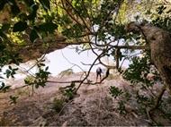 Actividades na Natureza: CIRCUITO de RAPPEL na Serra da Arrábida para 1 ou 2 Pessoas